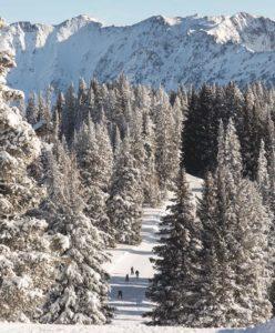 Ski-Trees-248x300.jpg